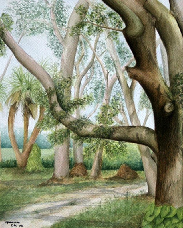 Treetrops Park #1