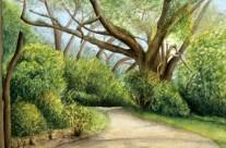 Treetops Park #2