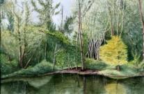 Treetops Park #3