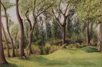Treetops Park #4