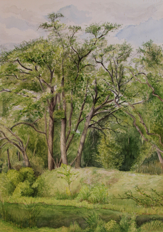 Treetops Park #6