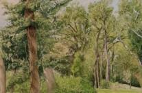 Treetops Park #7