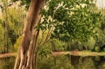 Treetops Park #8