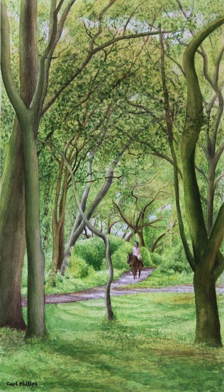 Treetops Park #12